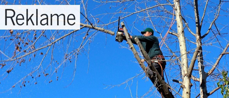 Forbered dig til sommeren – skal dine træer beskæres?