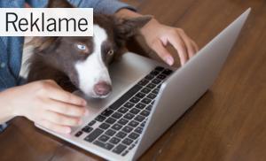3 gode råd til at holde din hund sund og rask