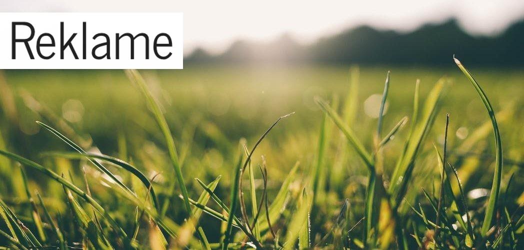 Vedligehold din græsplæne med en robotplæneklipper