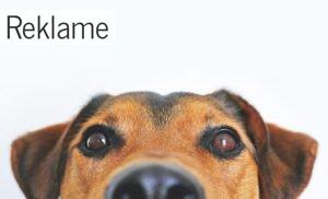 Hvorfor skal du vælge hunde- og katteartikler i god kvalitet?