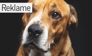 Hvilken type hundefoder du skal vælge?