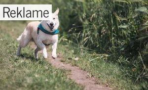 Guide: Gør gåturen bedre med din hund