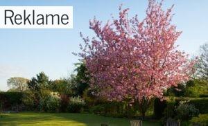 Sådan skaber du en hyggelig stemning i haven
