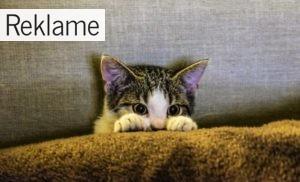 Kattegrus er dårligt for miljøet