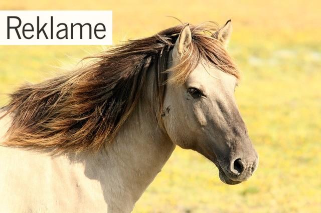Beskyt din hest så godt som muligt