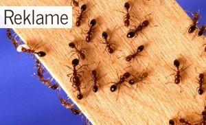Tips til at få bugt med myrerne